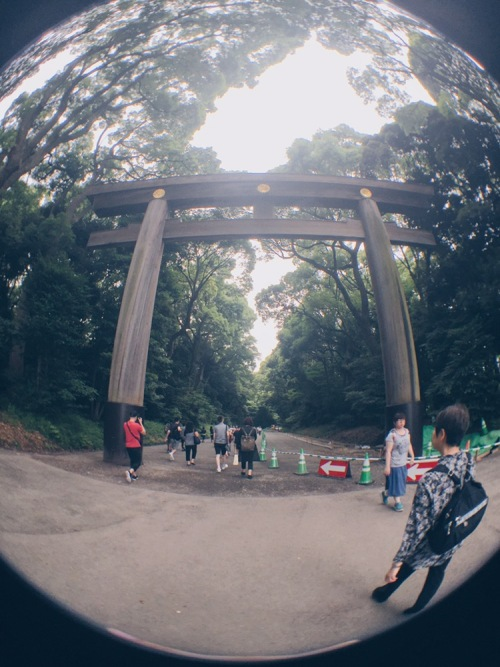Meiji Jingu/Meiji Shrine - Torii Gates - helloteri